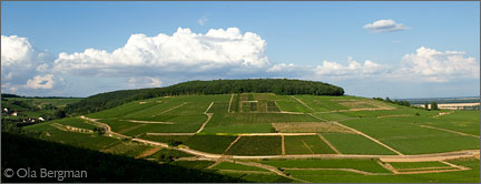 The Corton hill in Burgundy.