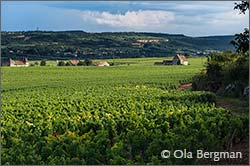 Chassagne-Montrachet in Burgundy.
