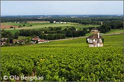 The Corton hill, Burgundy.