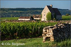 Chassagne-Montrachet, Morgeot.